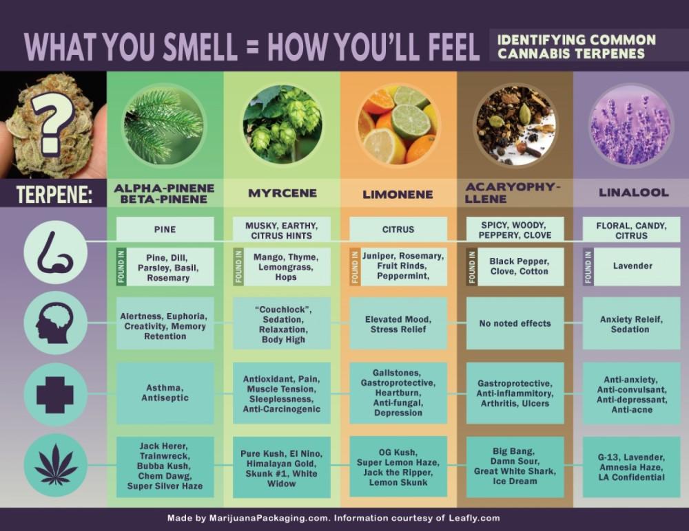 hempture-cannabis-terpenes